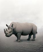 Alice Zilberberg: Restful Rhino