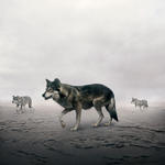 Alice Zilberberg: This Way Wolves