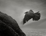 Beth Moon: Odin's Cove #14