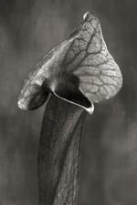 Beth Moon: Trumpet Plant