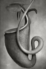 Beth Moon: Nepenthes Bicalcarata