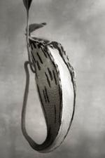 Beth Moon: Nepenthes Glabata