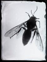Bill Westheimer: Buggy 12