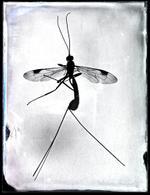Bill Westheimer: Buggy 16