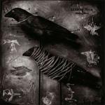 Carol Golemboski: Skinning Birds, 2003