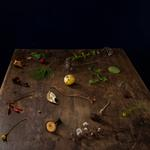 Cig Harvey: Fall Table, Rockport, Maine, 2013