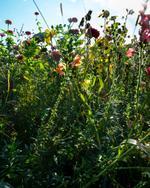 Cig Harvey: Summer Garden