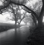 David H. Gibson: Branch Arch, Limpia Creek, Fort Davis, Texas, 1986