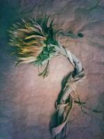 Diana Bloomfield: Sunflower, 2018