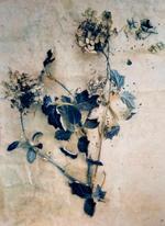 Diana Bloomfield: Dried Hydrangeas II , 2018