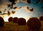 Ernie Button: Bales of Shredded Wheat #3, 2012