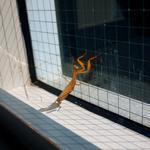 Hiroshi Watanabe: TDTDC 66 (Praying Mantis), 2010