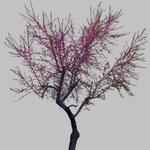 Hiroshi Watanabe: TDTDC 39 (Purple Tree), 2011