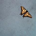 Hiroshi Watanabe: TDTDC 16 (Swallowtail Butterfly), 2009