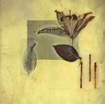 James Hajicek & Carol Panaro-Smith: Botanical/06-1