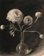 James Pitts: Five Ranunculus Flowers and Buds