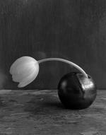 James Pitts: Single White Tulip in Round Black Vase