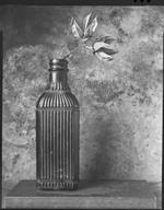 James Pitts: Brown Striped Antique Bottle two Dried Pods on Steel