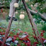 Jane Alden Stevens: After Inner Bag Removal, Fall, Aomori Prefecture