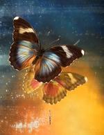 Jo Whaley: <i>Nymphalidae Hypolimnas</i>