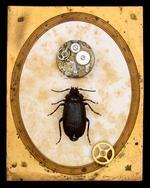 Jo Whaley: Coleoptera