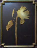 Kate Breakey: Sunflower