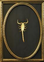 Kate Breakey: Scorpion