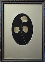 Kate Breakey: Botanical