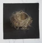 Kate Breakey: Nest 13
