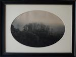 Kate Breakey: Trees in Mist, Benabbio, Italy