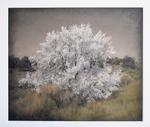 Kate Breakey: Pale Tree, New Mexico