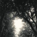 Ken Rosenthal: Glow