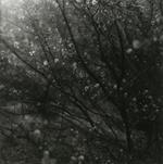 Ken Rosenthal: Illuminated