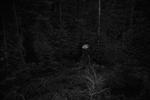Ken Rosenthal: Solitary