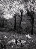 Kindred Spirits: Pentti Sammallahti – Transylvania, Romania, 2015