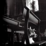 Kindred Spirits: Keith Carter - Dog in Church, 1994