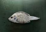 LOCAL EIGHT: Brad Wilson – Salton Sea Fish #1, Santa Fe, NM, 2010