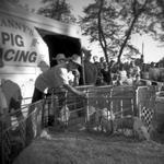 Meg Birnbaum: Granny's Racing Pigs, 2007