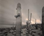 Mark Klett: 1 Hour Storm Saguaros