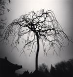 Michael Kenna: Forbidden City Tree, Study 1, Beijing, China, 2007