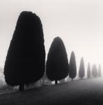 Michael Kenna: Seven Trees, Castello di Canossa, Italy, 2007