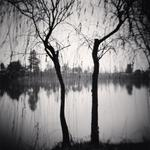 Michael Kenna: Afternoon Trees, Shexian, Anhui, China, 2008