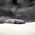 Michael Kenna: White Copse, Study 3, Wakkanai, Hokkaido, Japan, 2004