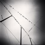 Michael Kenna: Fifty Two Birds, Zurich, Switzerland, 2008