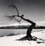 Michael Kenna: Kussharo Lake Tree, Study 12, Kotan, Hokkaido, Japan, 2008