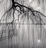Michael Kenna: Lake Tree, Beihai Park, Beijing, China, 2008