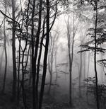Michael Kenna: Forest Mist, Study 2, Rigopiano, Abruzzo, Italy, 2016