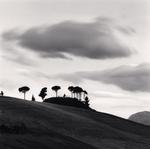 Michael Kenna: Pine Trees at Dusk, Loreto Aprutino, Abruzzo, Italy, 2016