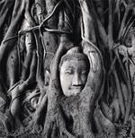 Michael Kenna: Wat Mahathat Buddha Head, Ayutthaya, Thailand, 2019
