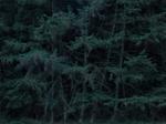 Michael Lange: WALD | Landscapes of Memory #4145